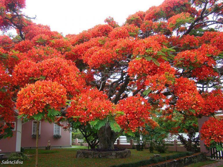 16 самых красивых деревьев в мире