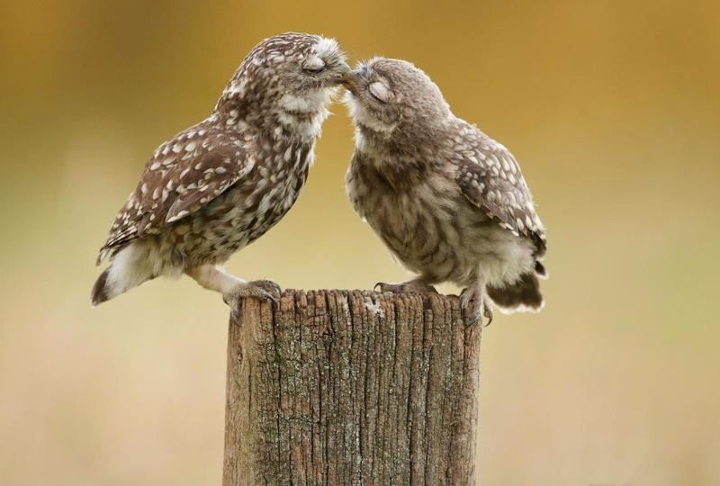 14 пронзительных цитат о любви от Классиков